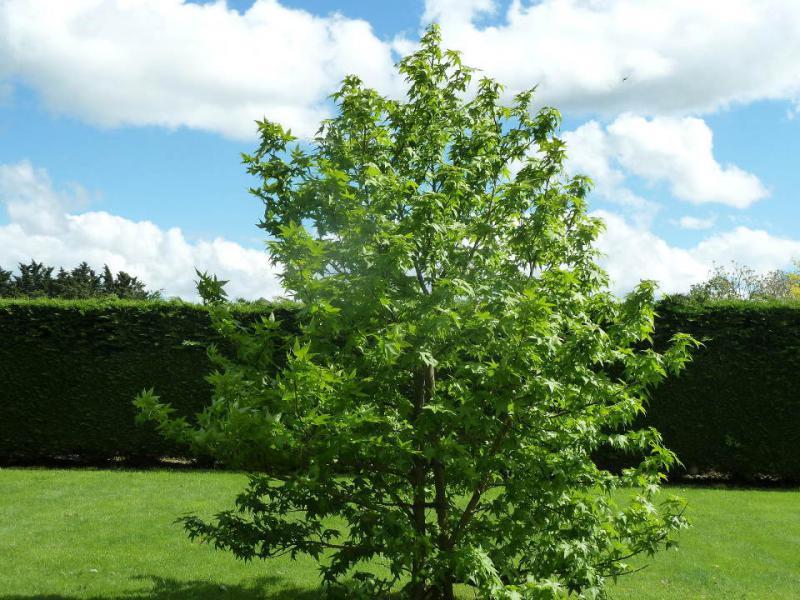 Les arbres du jardin au mois de mai for Les arbres du jardin